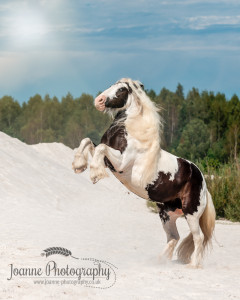 Horse rearing in the sand
