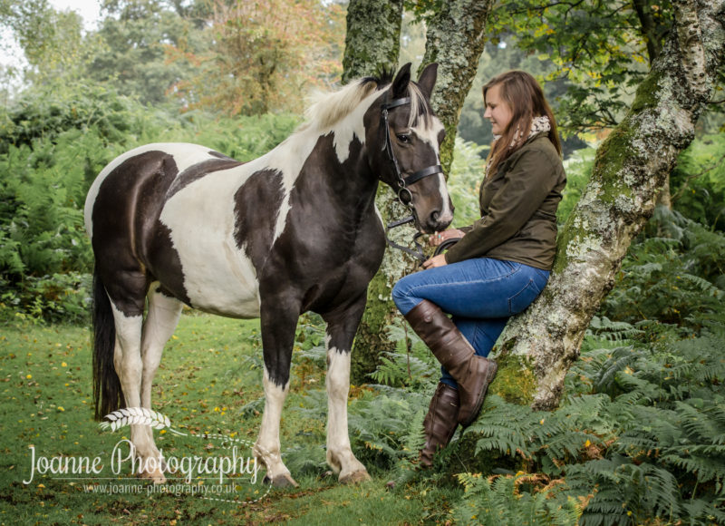 New Forest Equine Photography