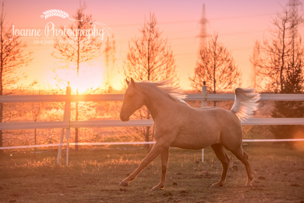 La Ferme Equestre Excalibur, Saint-Basile-le-Grand, Qb, Canada