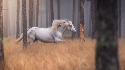 Horse at liberty