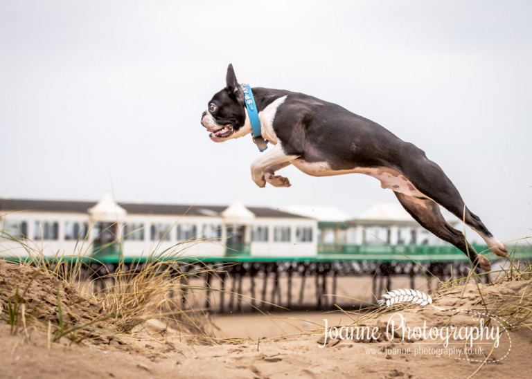 Dog Photographer Blackpool