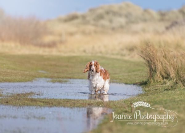 Talacre Beach Dog Photoshoot