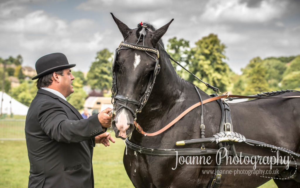 Bakewell horse show 2015