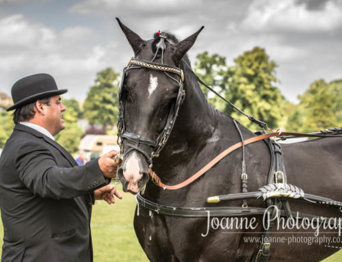 Hackney Horse Club show in Bakewell