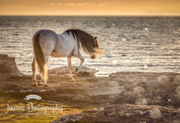 Stallion near sea