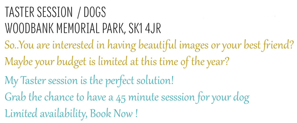 Pet photography session in Stockport, Cheshire