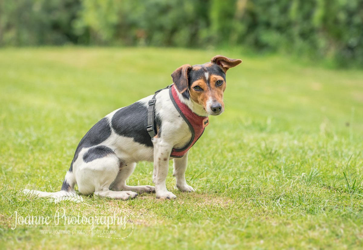 Pet Photography North Rode