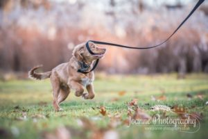 Dog Action Shot