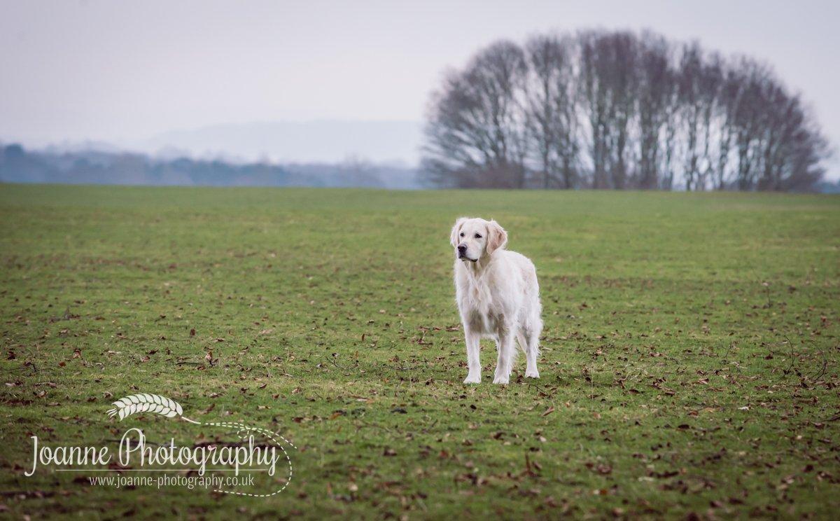 Dog Photographer Tatton Park