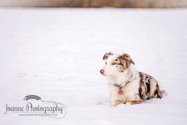 Dog in Snow Photography