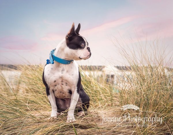 Dog photography Blackpool