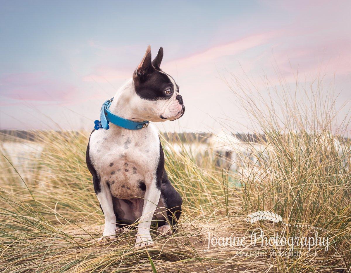 Dog photography Blackpool