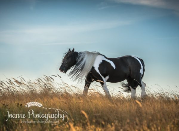 Horse Long Mane Photography