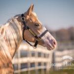 Horse Near Fence