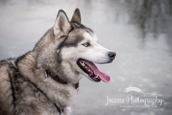 Husky Photography Pennington Flash Wigan