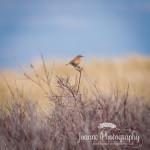 Bird Photography Talacre Beach