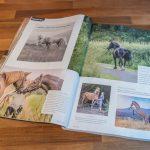 Cheshire Life Equestrian