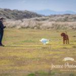 Dog and Skyte Talacre Beach