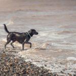 Dog at Talacre Beach