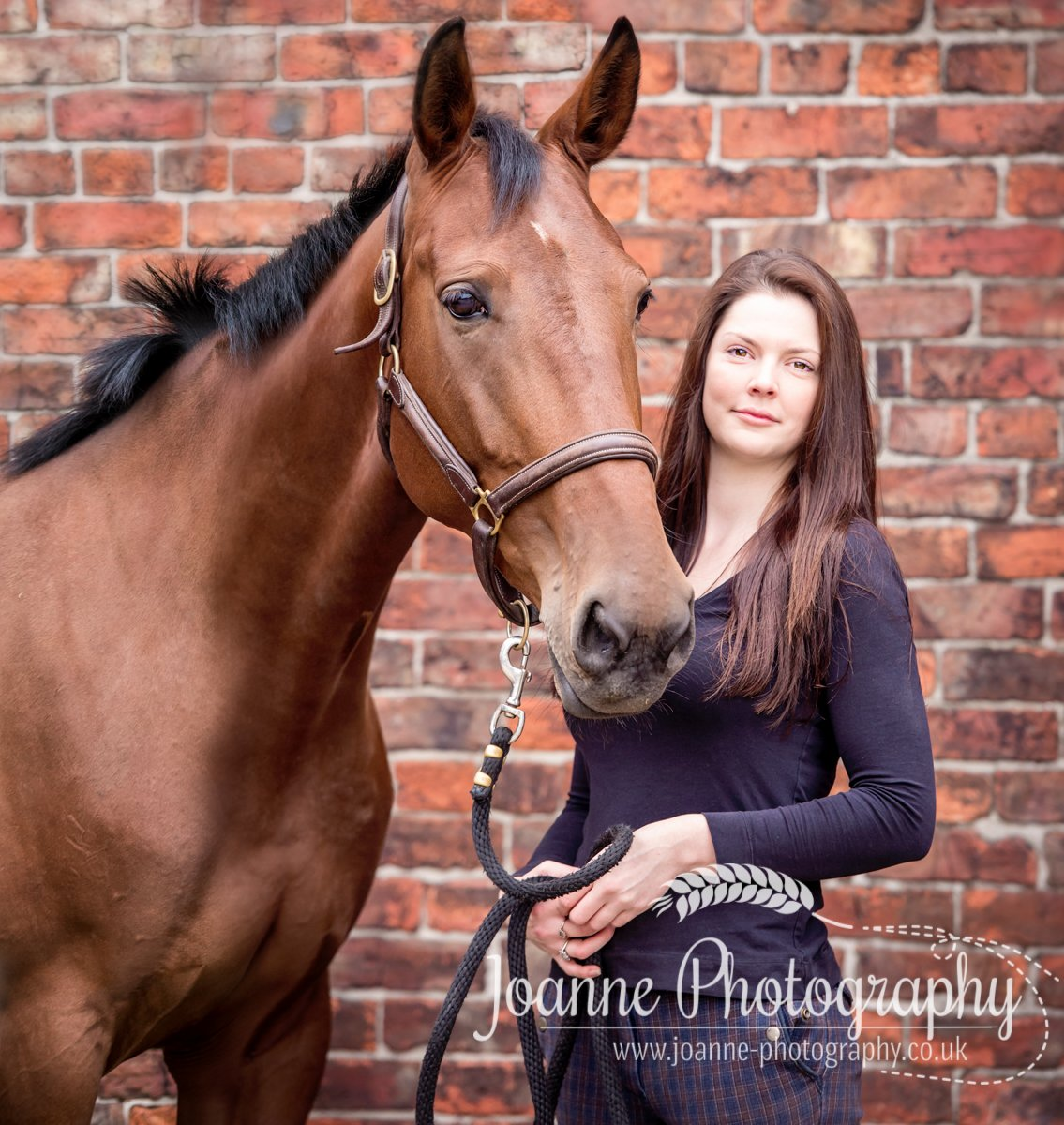 Equine photography Greater Manchester
