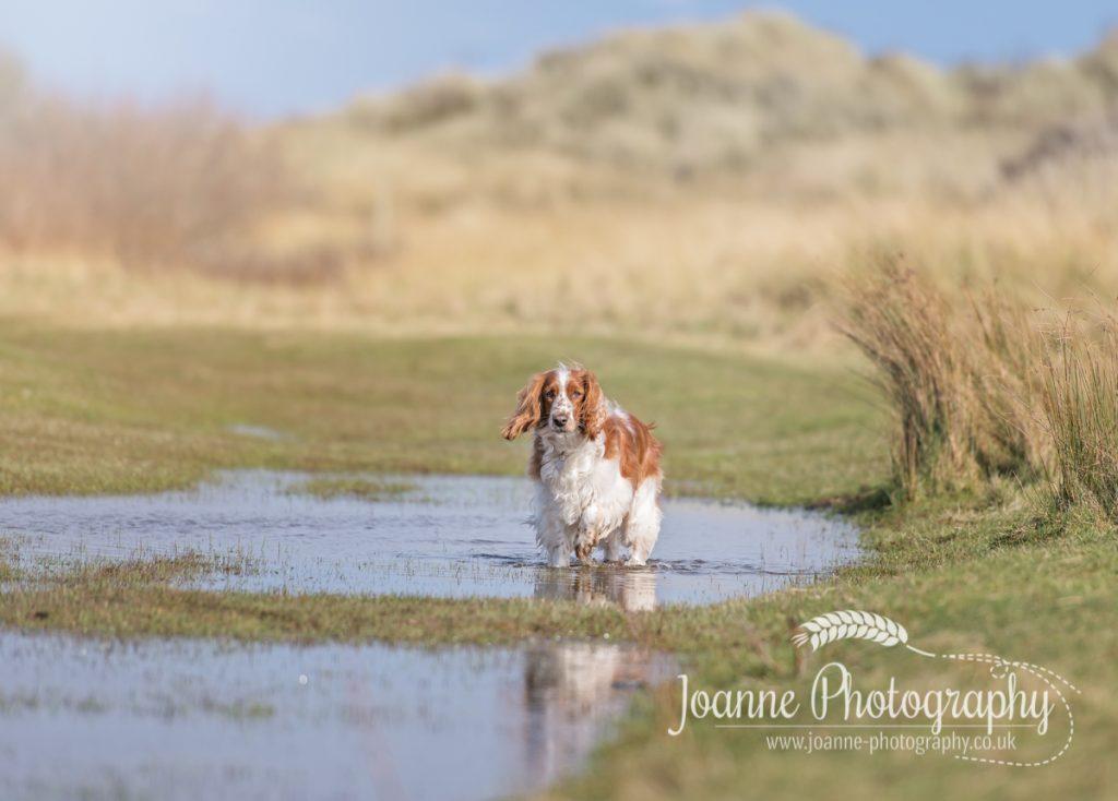 Talacre Beach Dog Photoshoot