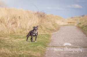 Talacre Beach dog photographer