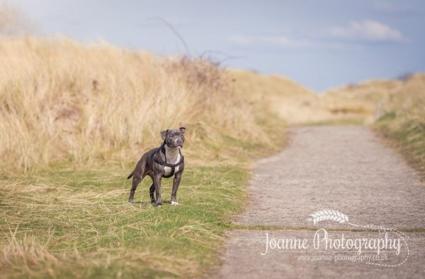 Talacre Beach dog photographer