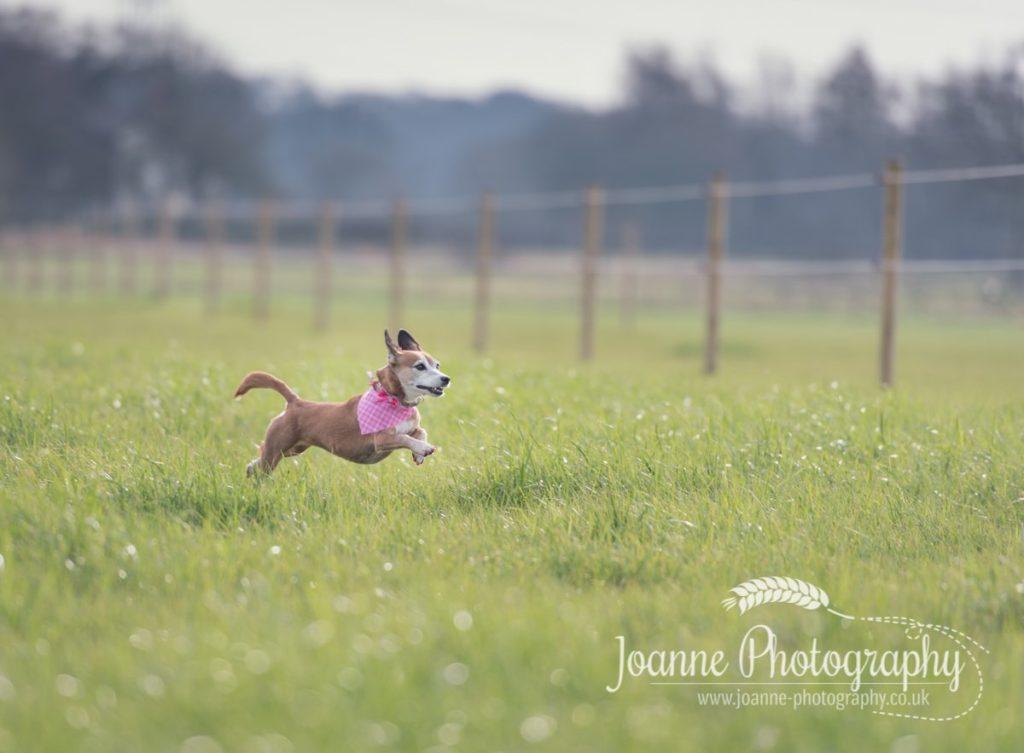 Dog Photography Session Lymm