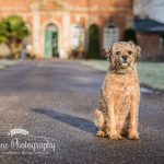 Dog Portrait Vernon Park