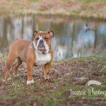 Dog at Dunham Massey Cheshire