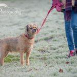 Dog on lead Stockport