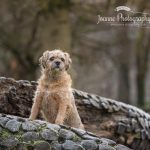 Dog photographer Stockport