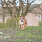 Dunham Massey Cheshire Pet Photography