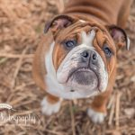 Dunham Massey Dog Photography