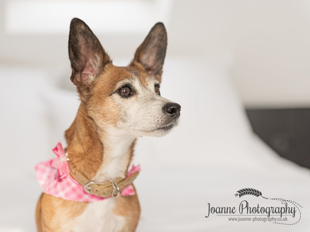 Indoor dog photography session
