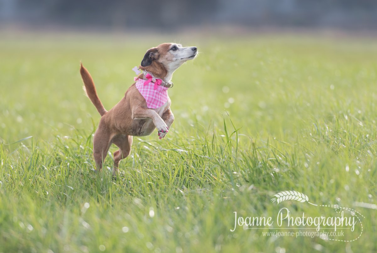 Lymm Pet Photographer