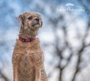 Pet Photography Stockport