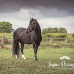 Horse in field Cheshire