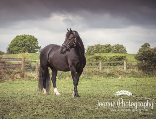 Horse photography Stockport – A session with Kay and Jazz