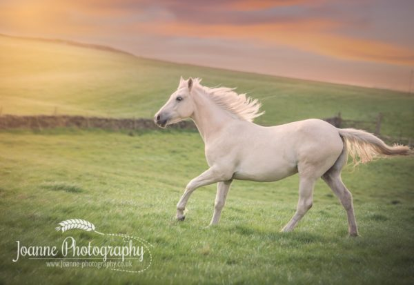 Horse Photography At Liberty