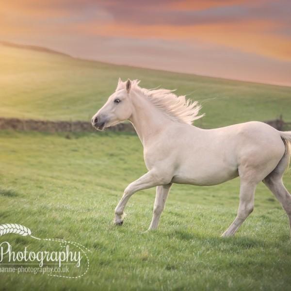 Horse Photography At Liberty