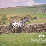 Horse Photography Macclesfield
