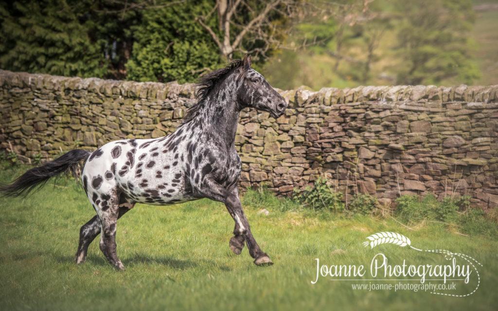 Horse action shot