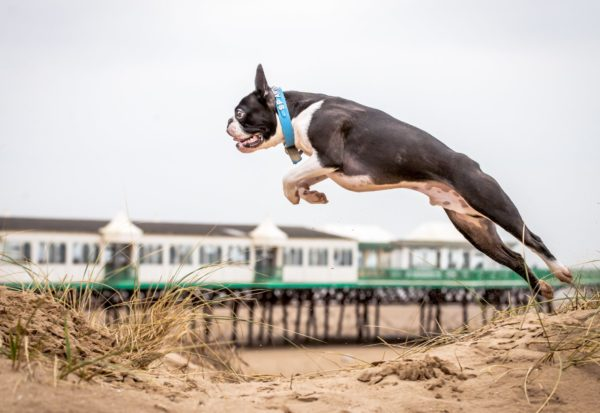Dog jumping beach