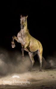 horse rearing on black background