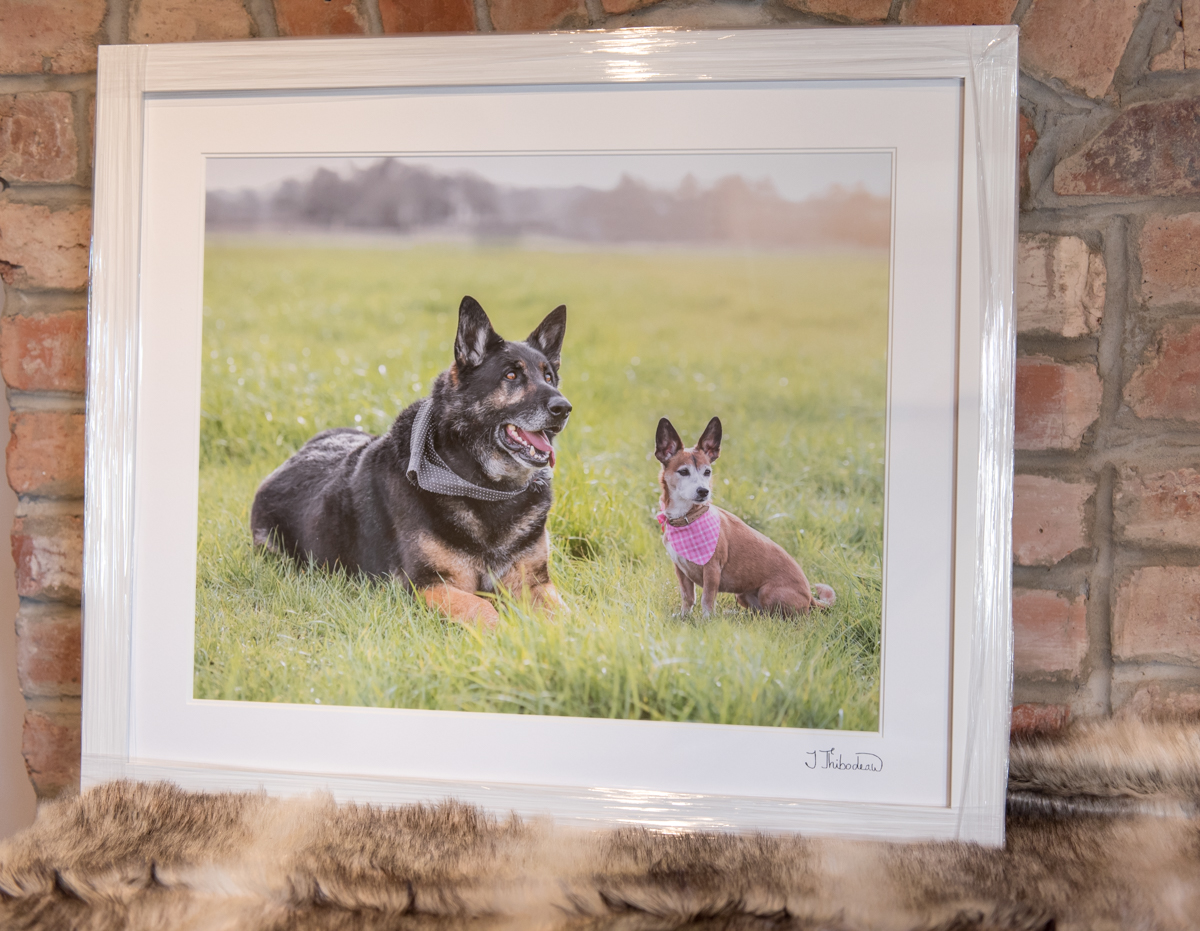 Pet-Framed-Image