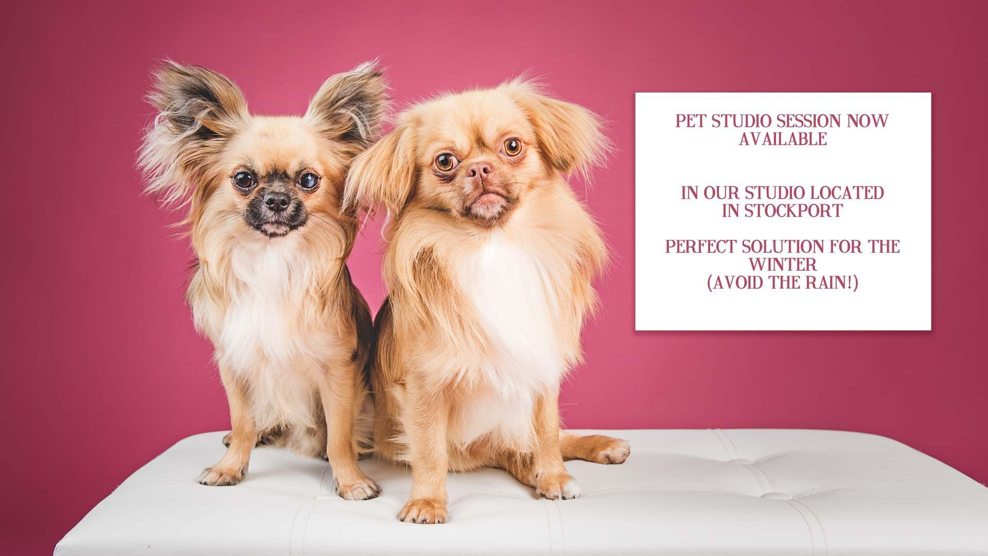 Pet Photography Studio Session – What it's all about!