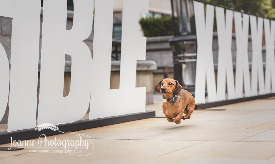 City Center Manchester Dog Photography