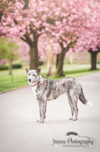 Dog Portrait Blossoms