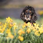 Dog with daffodil